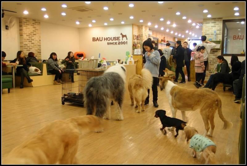Kore'de en iyi 20 temalı kafe