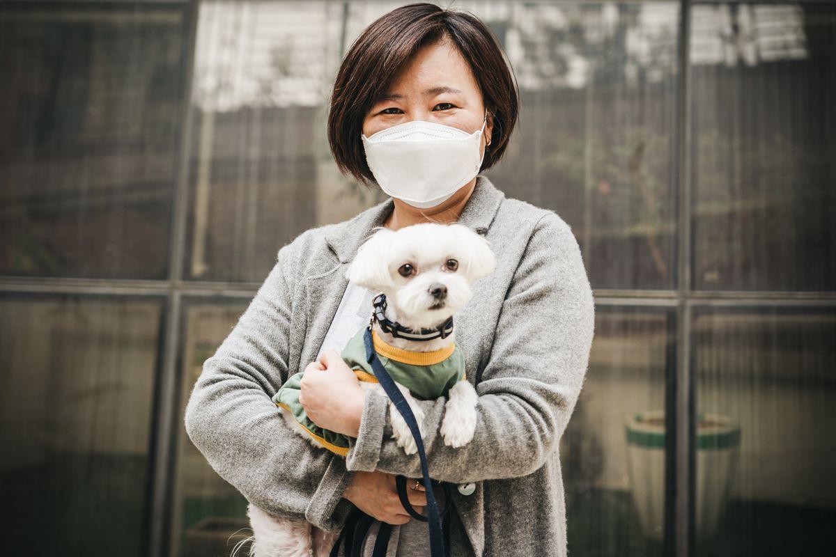Kore'de Kayıtlı 2 Milyon Köpek Kayıtdışı 4 Milyon